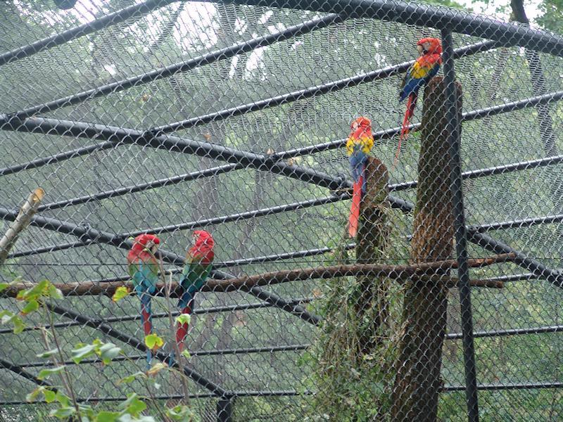 Amazonas la foresta delle ara - Natura Viva di Bussolengo