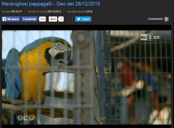 Documentario Meravigliosi pappagalli
