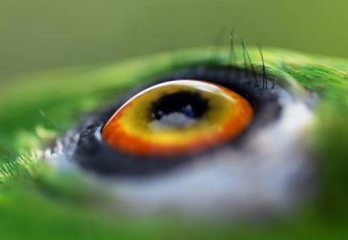 Infiammazione oculare