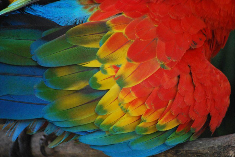 La muta e il piumaggio dei pappagalli