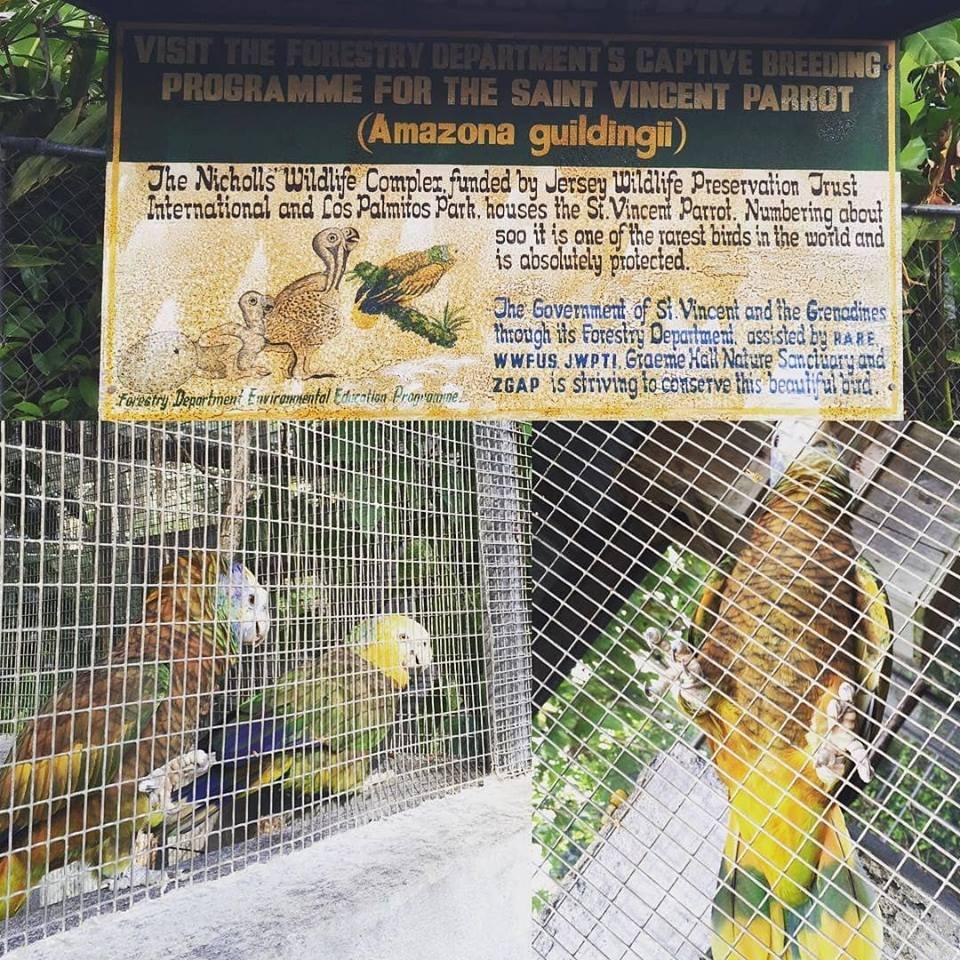Nicholas Wildlife Aviary Complex