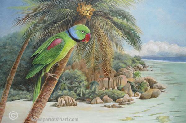Parrocchetto delle Seychelles